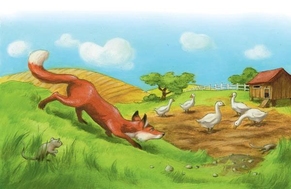 Ein Fuchs in Lauerstellung vor einer Gänsewiese